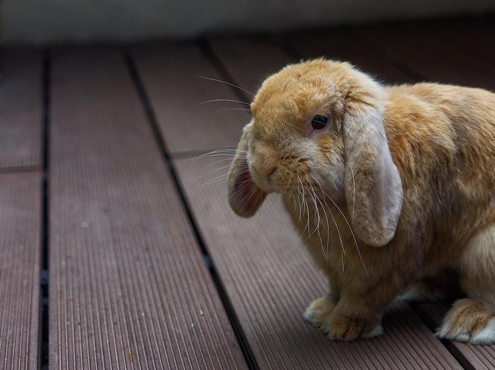 brown rabbit on brown wooden floor
