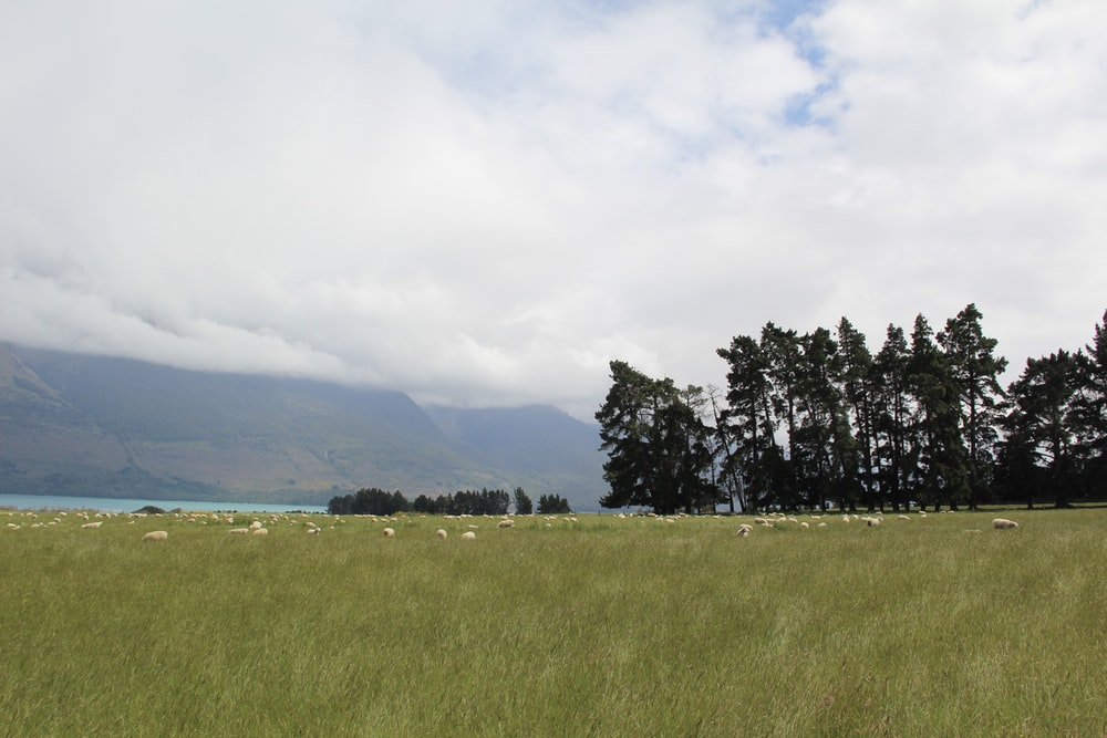 green grass field near green trees under white clouds during daytime