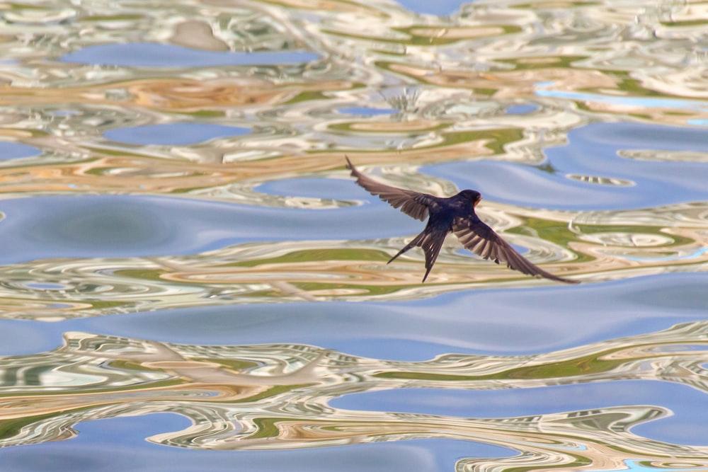 black bird flying over water during daytime