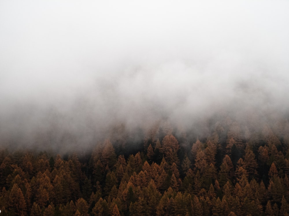 green and brown trees under white clouds
