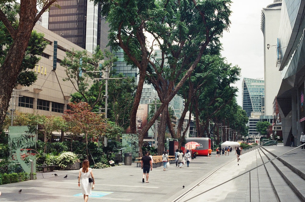 people walking on sidewalk near green trees and buildings during daytime