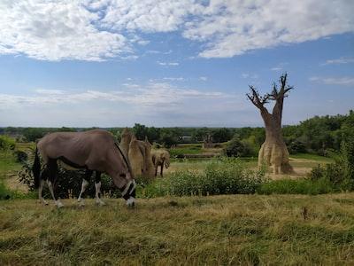 Le Zoo African Safari,parc zoologique de Plaisance-du-Touch