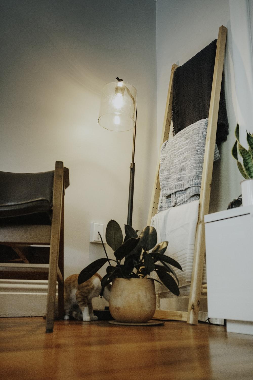 green indoor plant beside brown wooden chair