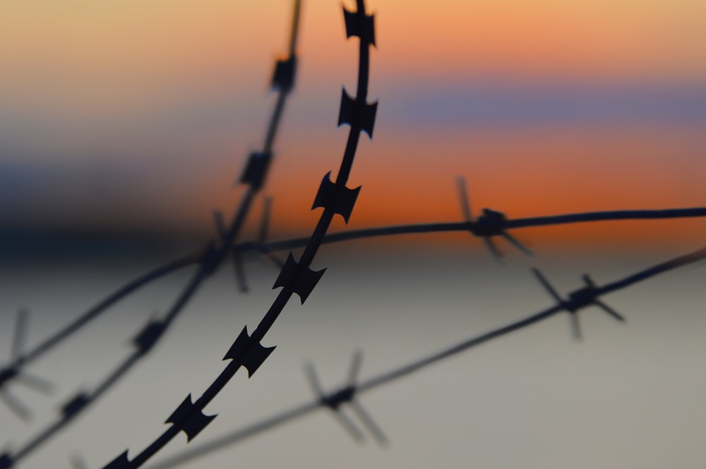 silhouette of barbwire during sunset