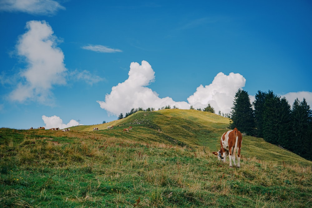 white and brown horse on green grass field under blue sky and white clouds during daytime