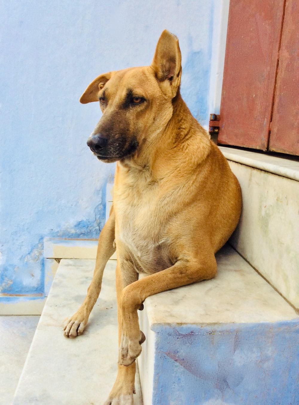brown short coated dog lying on white floor tiles