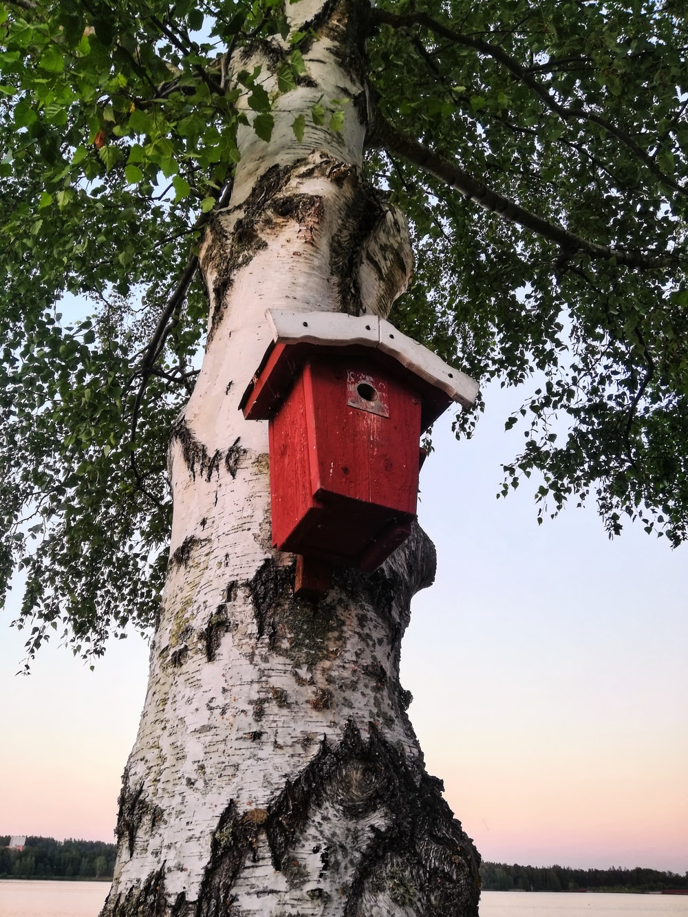 red and white wooden birdhouse on tree
