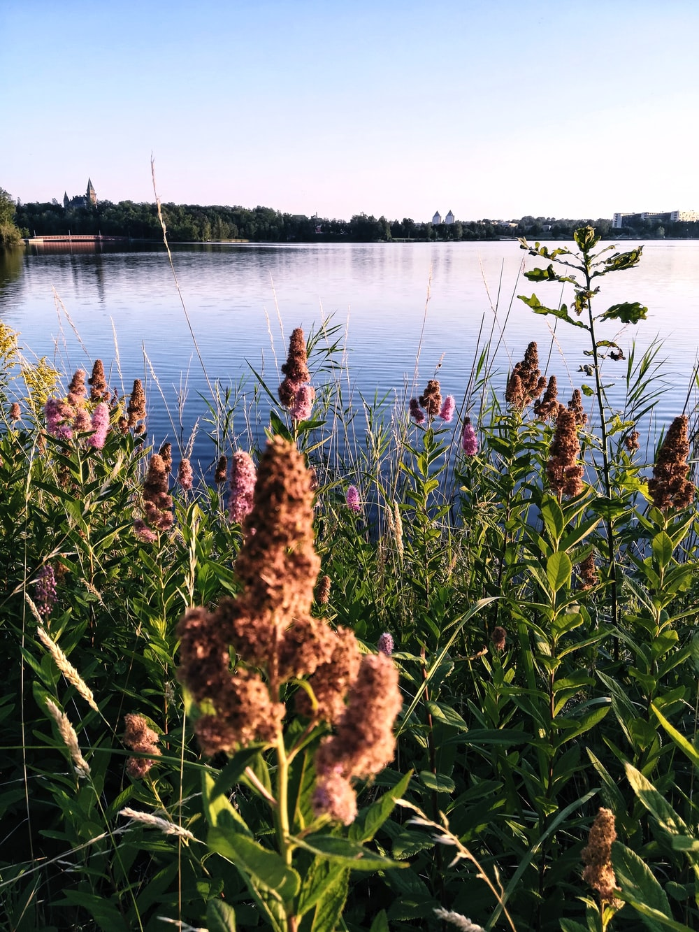 brown flowers near body of water during daytime