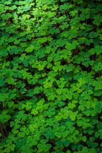 The Luck Farmer short story stories