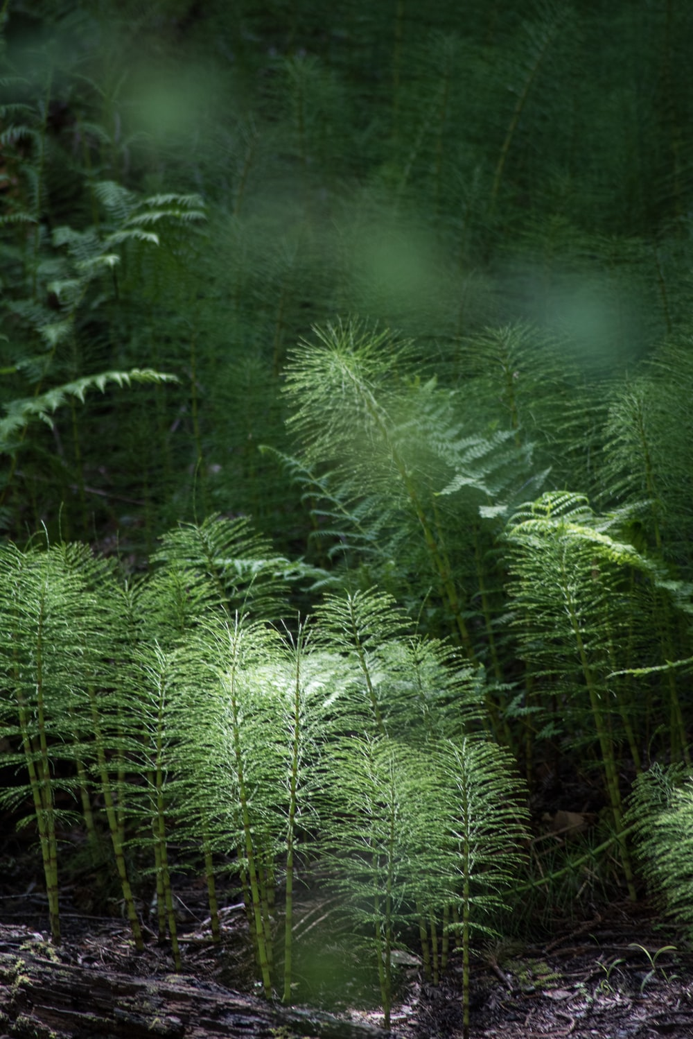 green fern plant during daytime