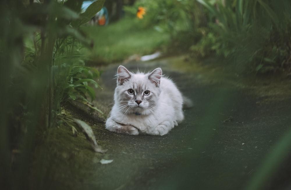 white cat on water near green plants