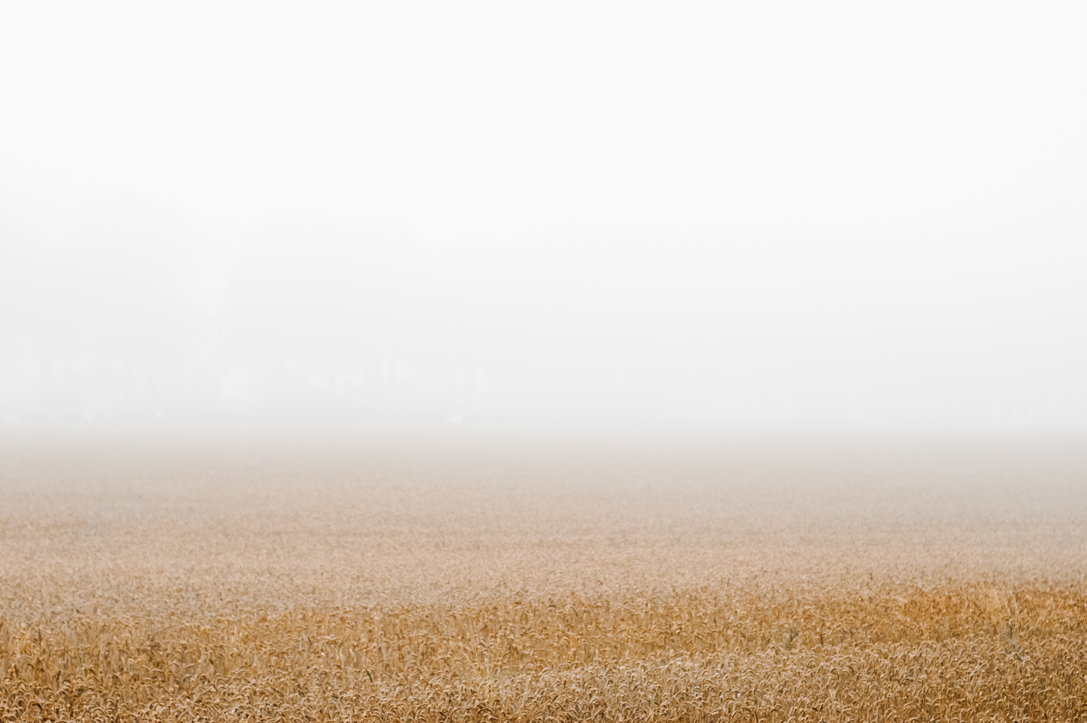 Driving through the Mendips we hit a pea souper, such a change from the blazing heat we've had here in the UK. Loved the negative space vs wheat field 😍