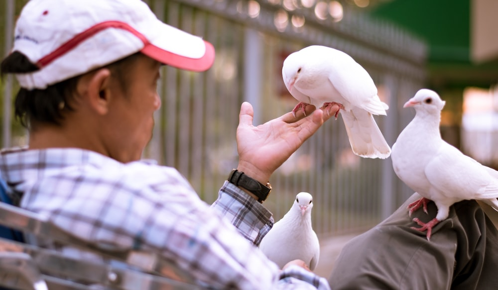 man in white and black plaid dress shirt holding white bird