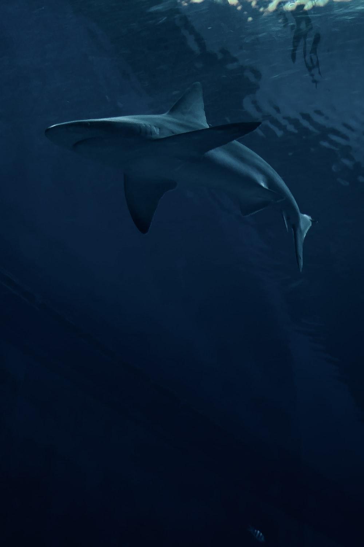 white shark under the sea