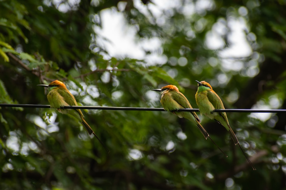 two birds perched on tree branch during daytime