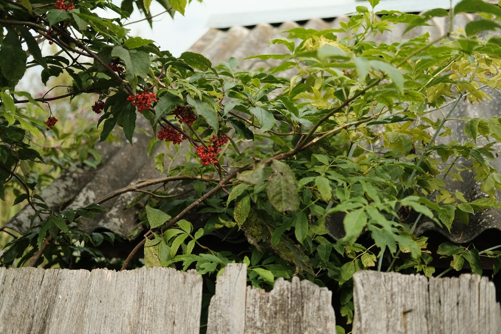 red and green leaves on white wooden fence
