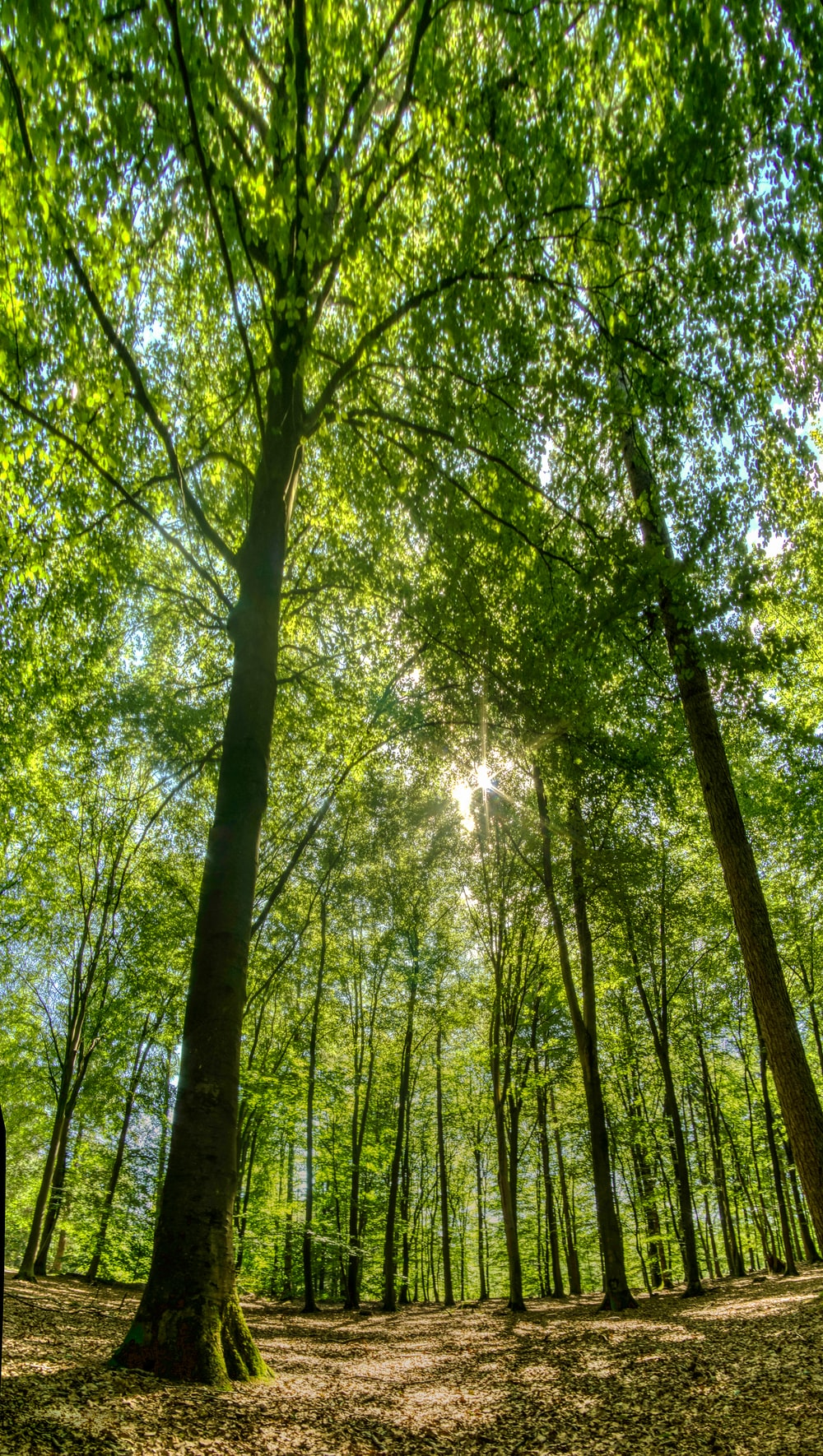 green trees under sunny sky