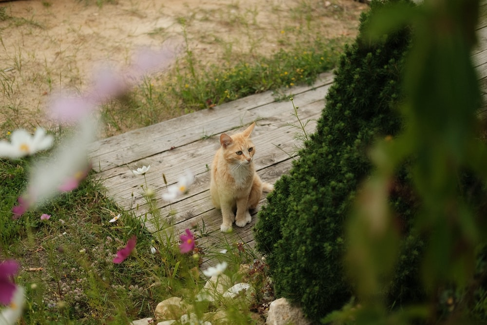 orange tabby cat on gray wooden pathway
