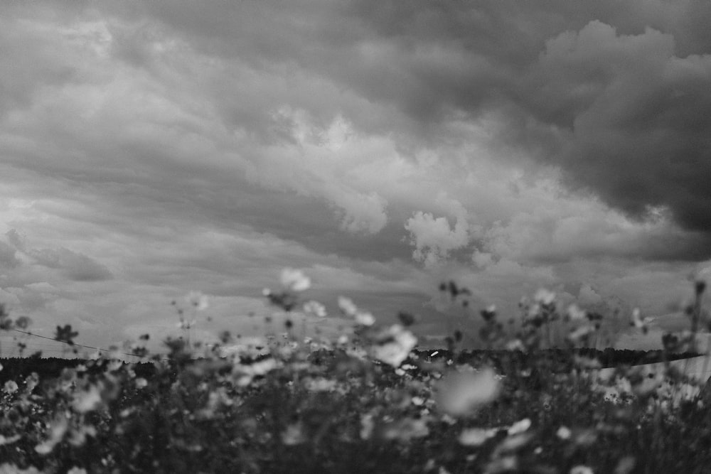 grayscale photo of trees under cloudy sky