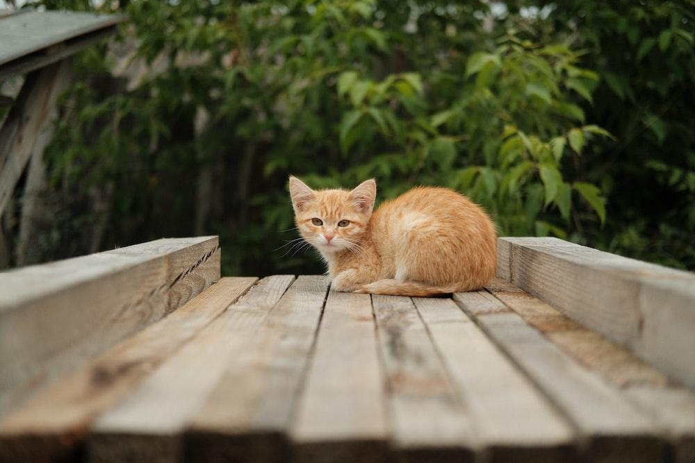 orange tabby cat lying on brown wooden plank