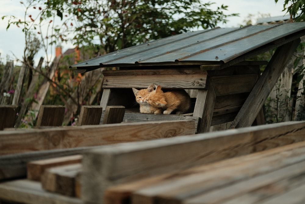 brown and black cat lying on brown wooden fence during daytime