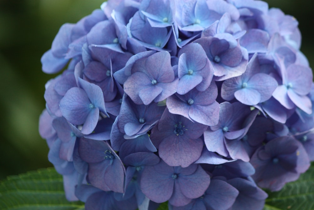 purple flower in close up photography