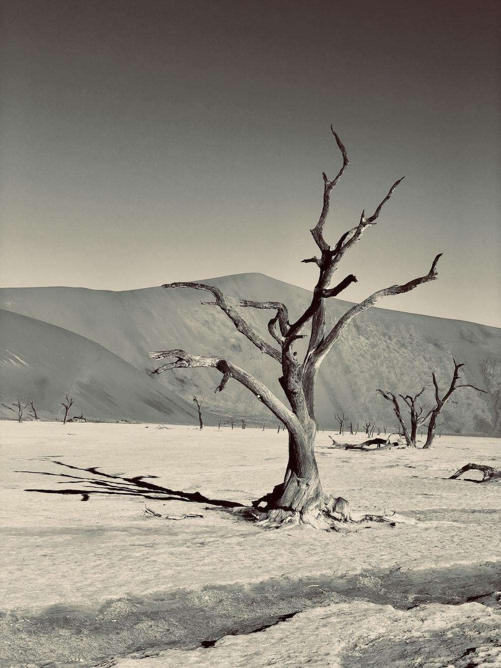 bare tree on white sand during daytime