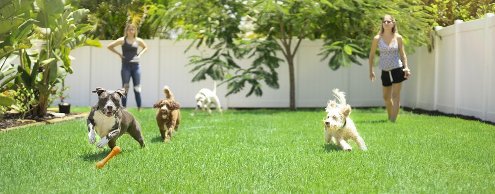 white and brown dogs on green grass field during daytime