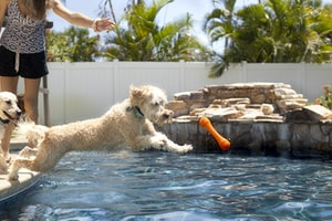 white poodle in water during daytime