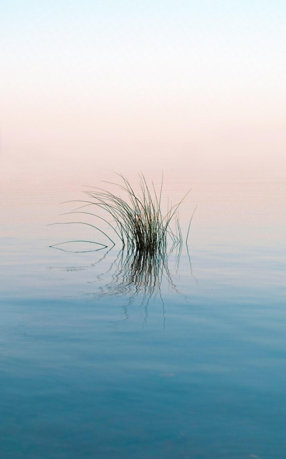 green grass on blue water