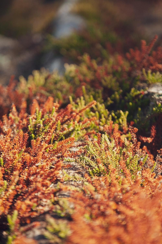 orange and green grass in tilt shift lens
