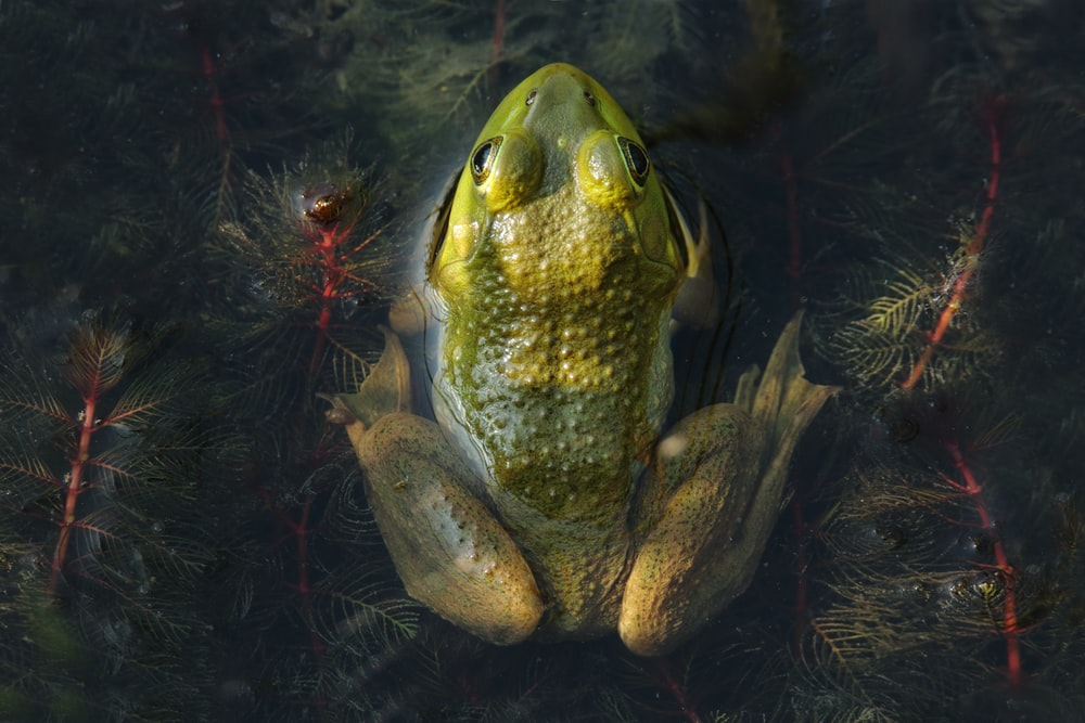 green frog in water with red and black lights