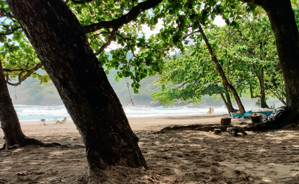 green tree on beach shore during daytime
