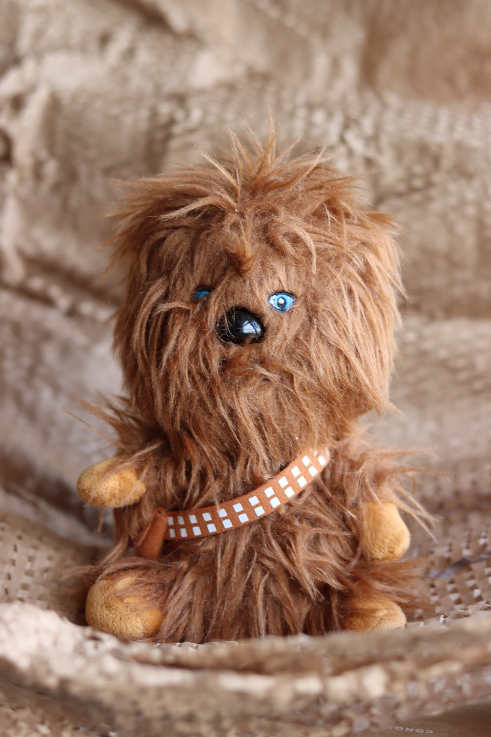 brown long coated small dog