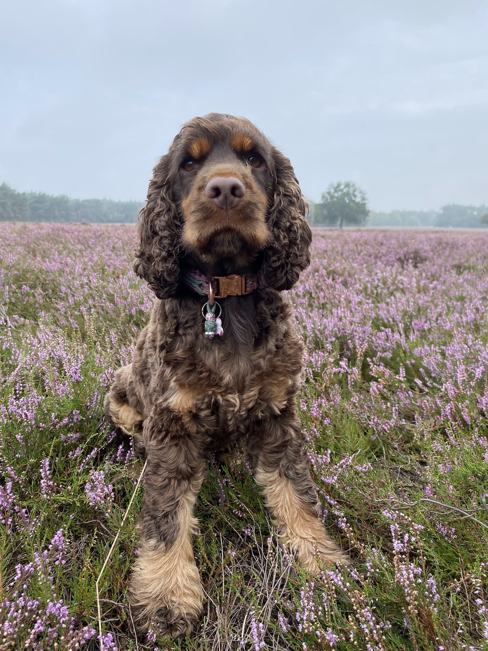 brown and black long coated dog on purple flower field during daytime