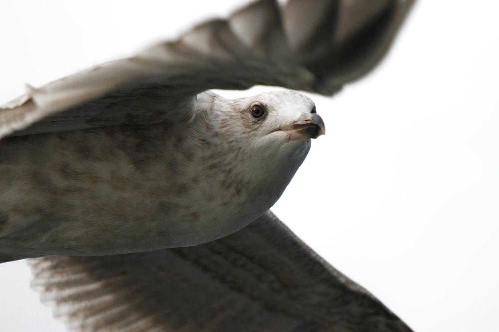 white bird on black textile