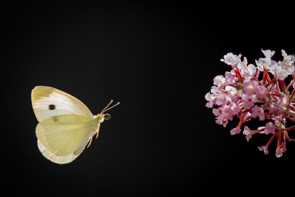 green butterfly perched on purple flower