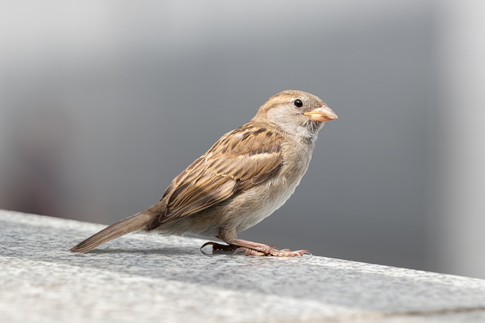 brown sparrow perched on tree branch