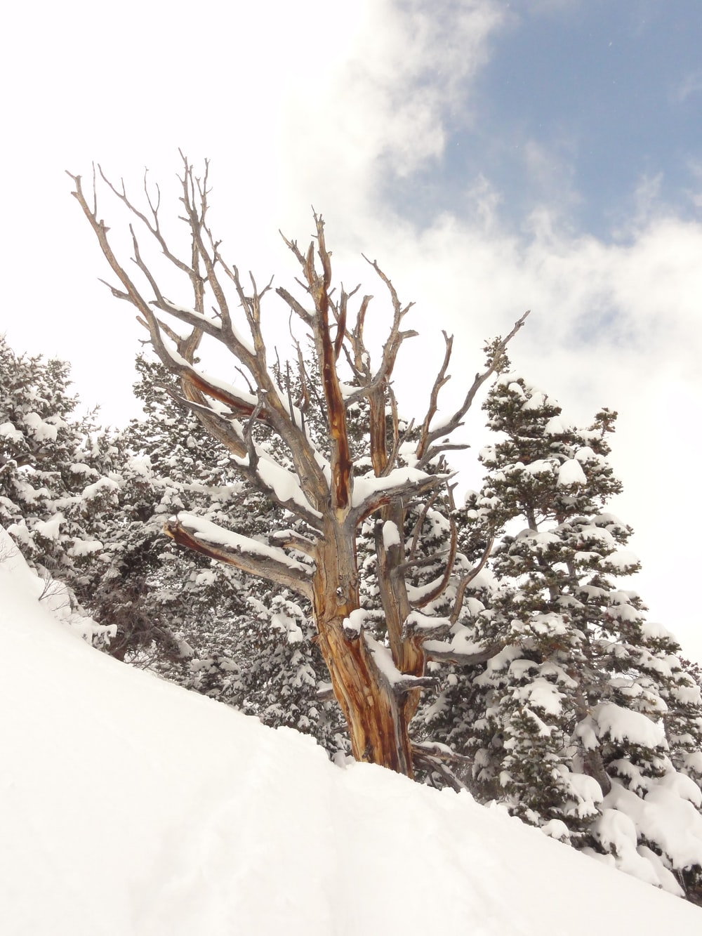 brown bare tree on snow covered ground under white cloudy sky during daytime