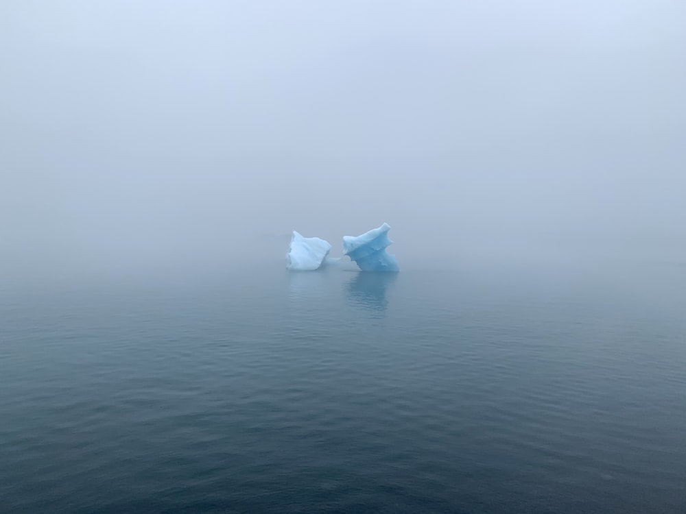 white plastic bag on body of water