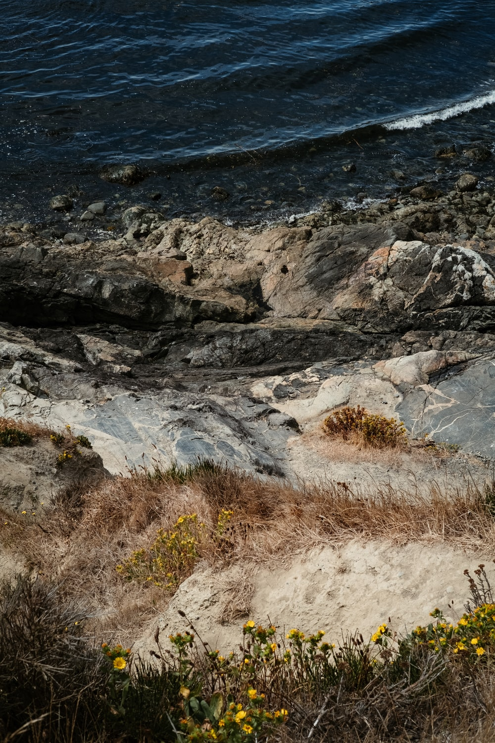 brown grass on rocky shore during daytime
