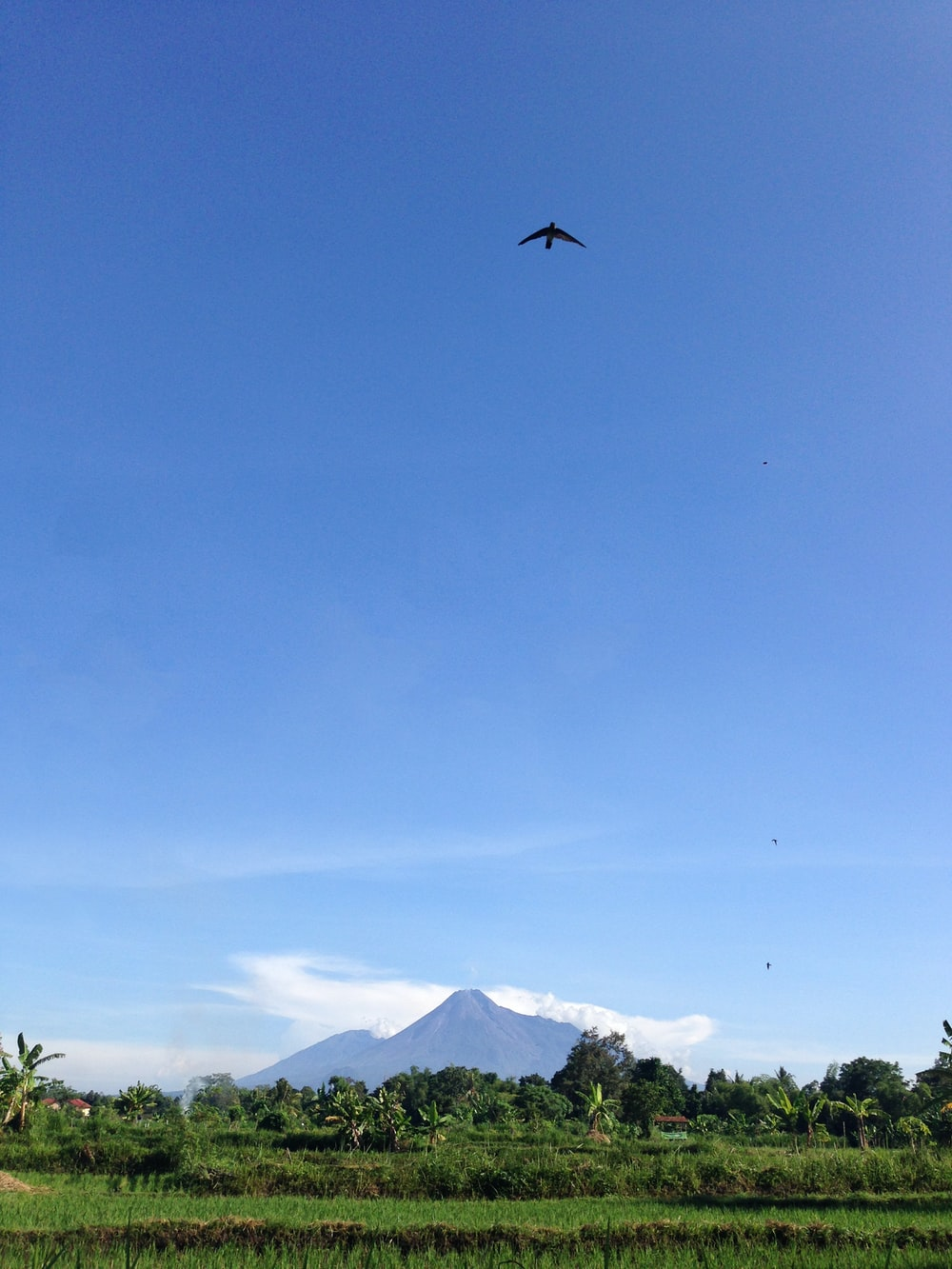 bird flying over green trees and mountain during daytime