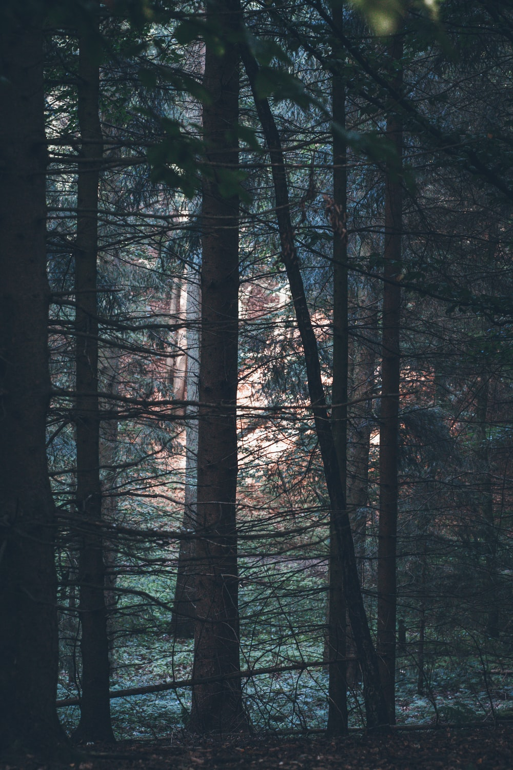 black and gray trees during daytime