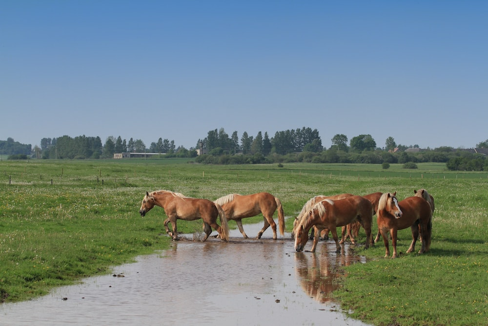 brown horses on water during daytime
