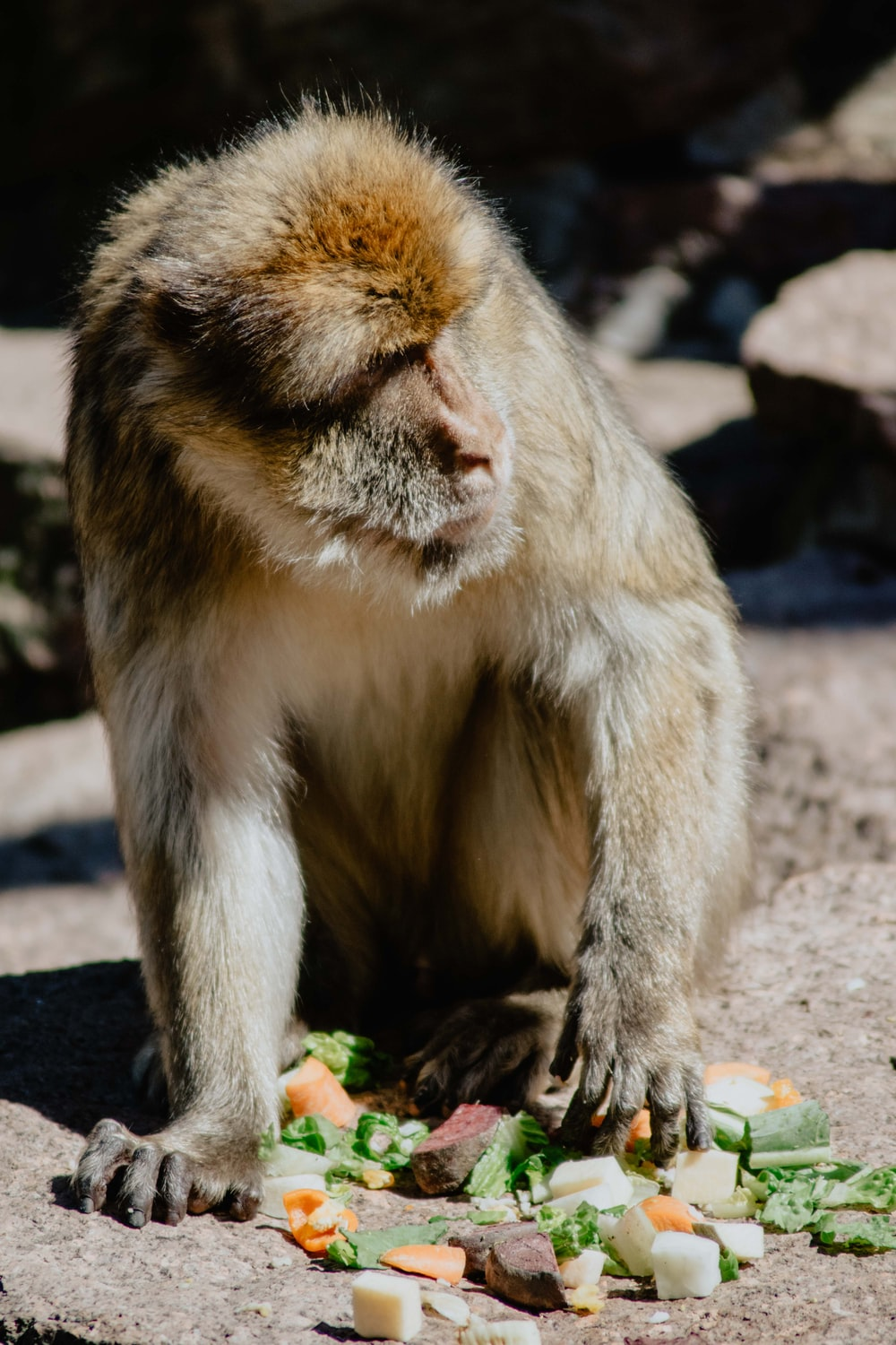 brown monkey sitting on brown wooden surface during daytime