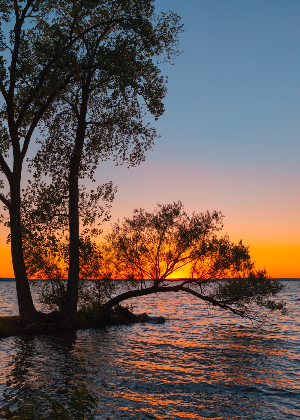 green tree on body of water during sunset