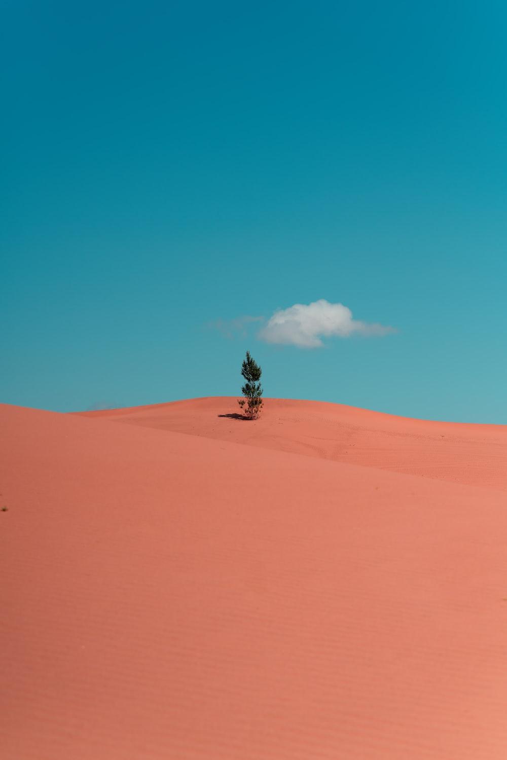 man in black jacket sitting on brown sand under blue sky during daytime