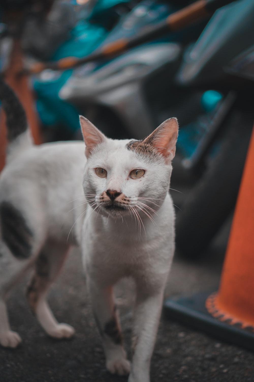 white cat on blue textile
