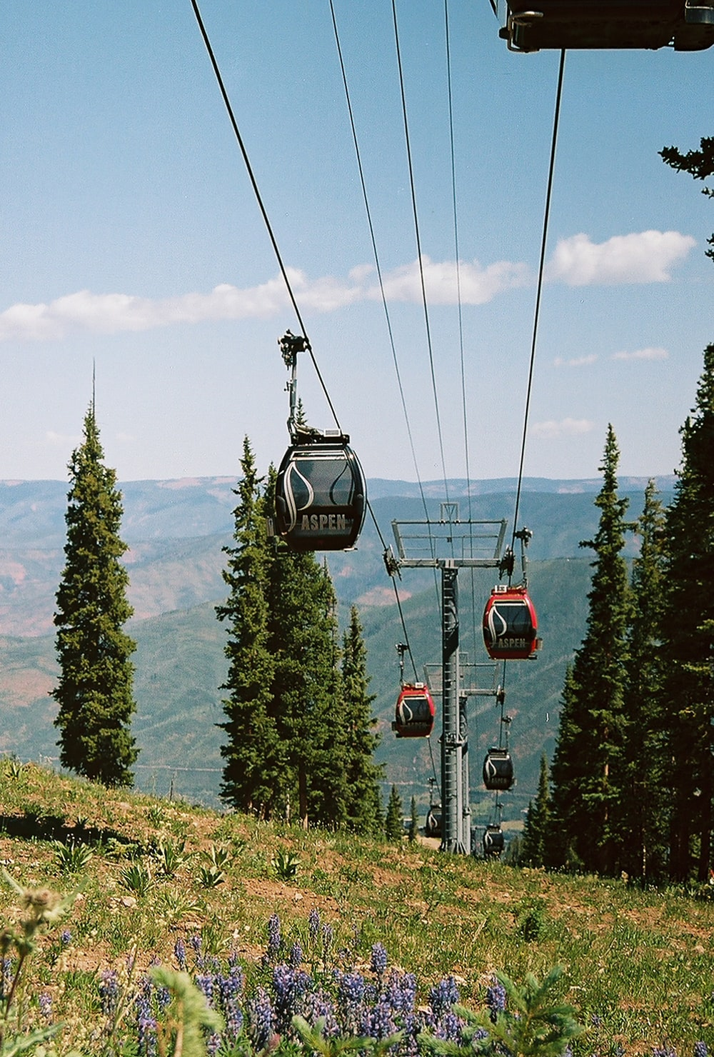red cable cars over green trees during daytime