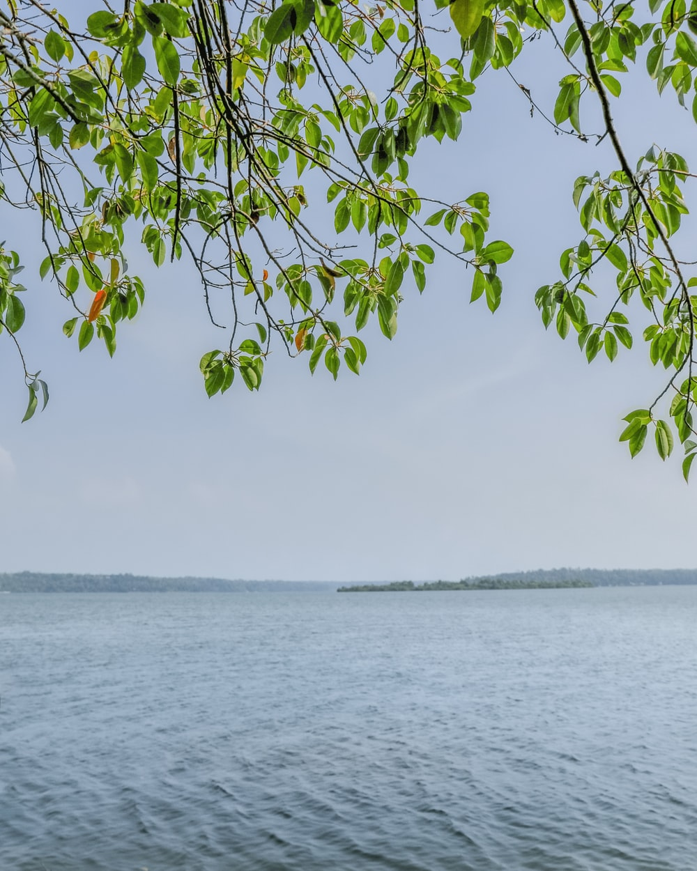 green leaves on body of water during daytime
